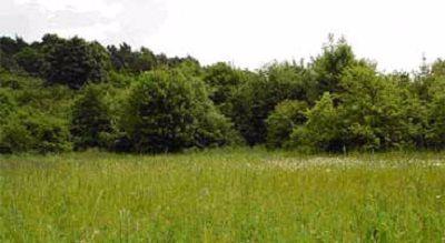 Shackledell area of grassland