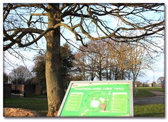 Hampson Park Tree Trail