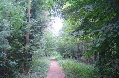 Chells Woodland Walk